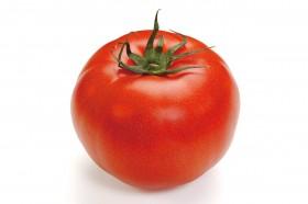 02_kuma_tomato